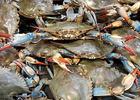 Публичные консультации усугубили конфликт рыбаков и правительства