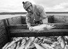 """Запрет на вылов лосося в открытом море выгоден американским рыбакам - газета """"Взгляд"""""""