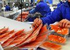 Норвежская рыба готова искать другие рынки