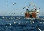 Рыбная отрасль обсуждает пути ответа на обвинения в браконьерстве