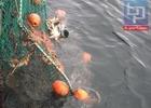 Мурманчане встали на сторону рыбаков по вопросу введения крабовых аукционов