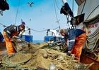 Наказание за эффективность: ФАС винят в переделе рыбопромысловой отрасли
