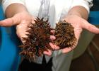 Законопроект «Об аквакультуре...» принят Госдумой