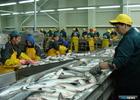 Проект об ограничении госзакупок импортной рыбы оценят в Правительстве