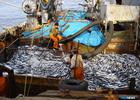 Профсоюз против образа рыбака-браконьера