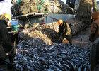 Рыбацкое сообщество просит освободить путь на внутренний рынок