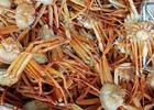 Рыбаки подсчитывают потери от заморозки квот глубоководных крабов