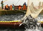 Санкции РФ больно ударят по рыбакам Шотландии и Норвегии