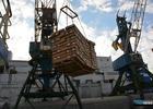 Решение приморского Россельхознадзора удивило бизнес