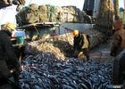 Рыбаки оценили последствия экономических санкций в отношении России