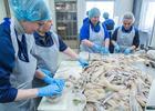 Рыбники получили новый профстандарт