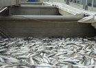 Власть и бизнес определили, что нужно для продвижения российской рыбы