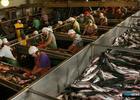 Аркадий Дворкович поручил Минсельхозу оптимизировать ветконтроль рыбы