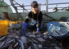 Токио оплатит рыбакам потери от запрета на дрифтерный лов в водах РФ