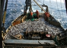 Рыбакам объявили информационную войну