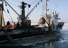 «Рыбный союз» выступил за пересмотр принципа распределения квот