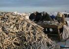 В Приморье рассчитывают повысить доступность рыбы через аукционы
