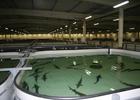 Крымчан волнуют вопросы рыбоводства по российским правилам