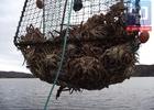 Эксперты рыбопромышленной сферы обсудят возможные последствия введения крабовых «аукционов»