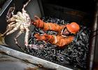 Рыболовы попросят у правительства защиты от атак центральных телеканалов