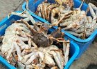 Сахалинские рыбаки попросили депутатов защитить их от инициативы Росрыболовства