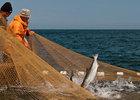 На Сахалине продлен сбор заявок для участия в программе «Доступная рыба»