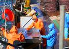 Минвостокразвития предлагает обеспечить «крабовый заказ»
