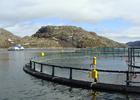 Запросы на создание установок для аквакультуры – в Росприроднадзор