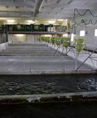 Бизнес не разделяет стремления властей любой ценой принять Федеральный закон «Об аквакультуре» до конца 2012 года